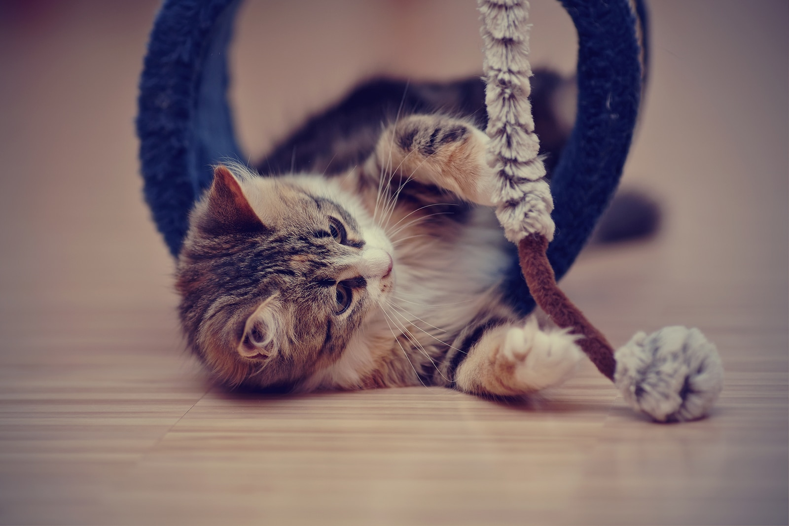 A small tabby kitten lies on ground pawing at fuzzy cat toy.